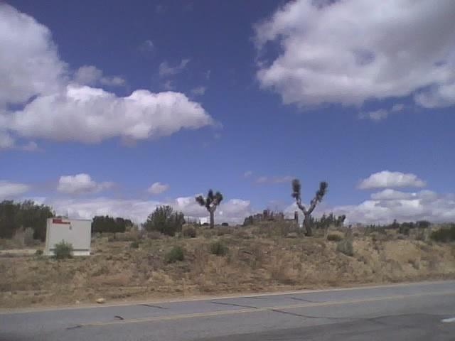Desert-wed2