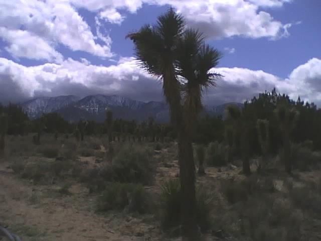Desert-wed5